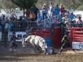 Ramona_Rodeo_0018-2013