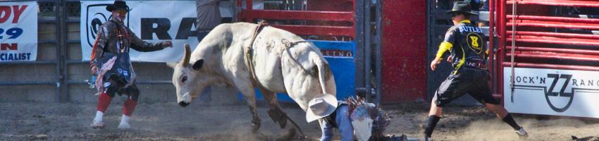 Ramona Rodeo Bull